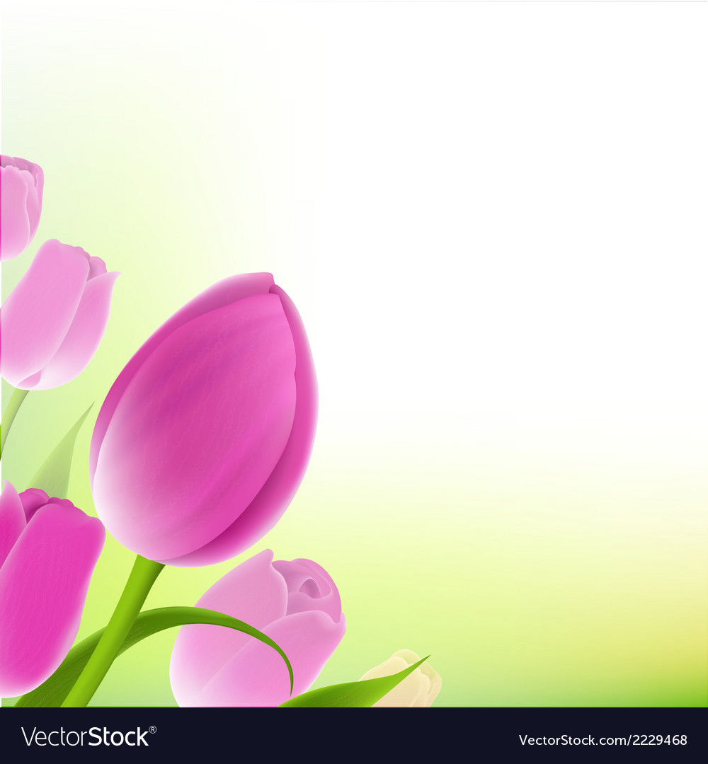 Card of pastel tulips vector | Price: 1 Credit (USD $1)