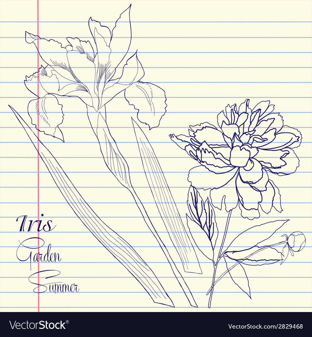 Notebook set with peony and one iris vector | Price: 1 Credit (USD $1)