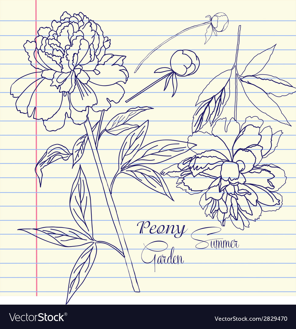 Notebook set with two peonies vector