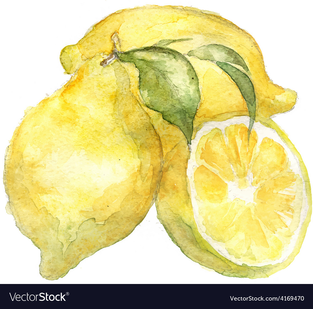 Vegetable vitamin vegetarian painting watercol vector | Price: 1 Credit (USD $1)