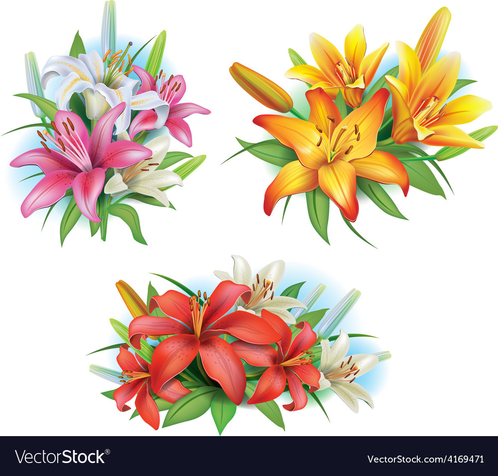 Arrangement from lilies flowers vector | Price: 3 Credit (USD $3)
