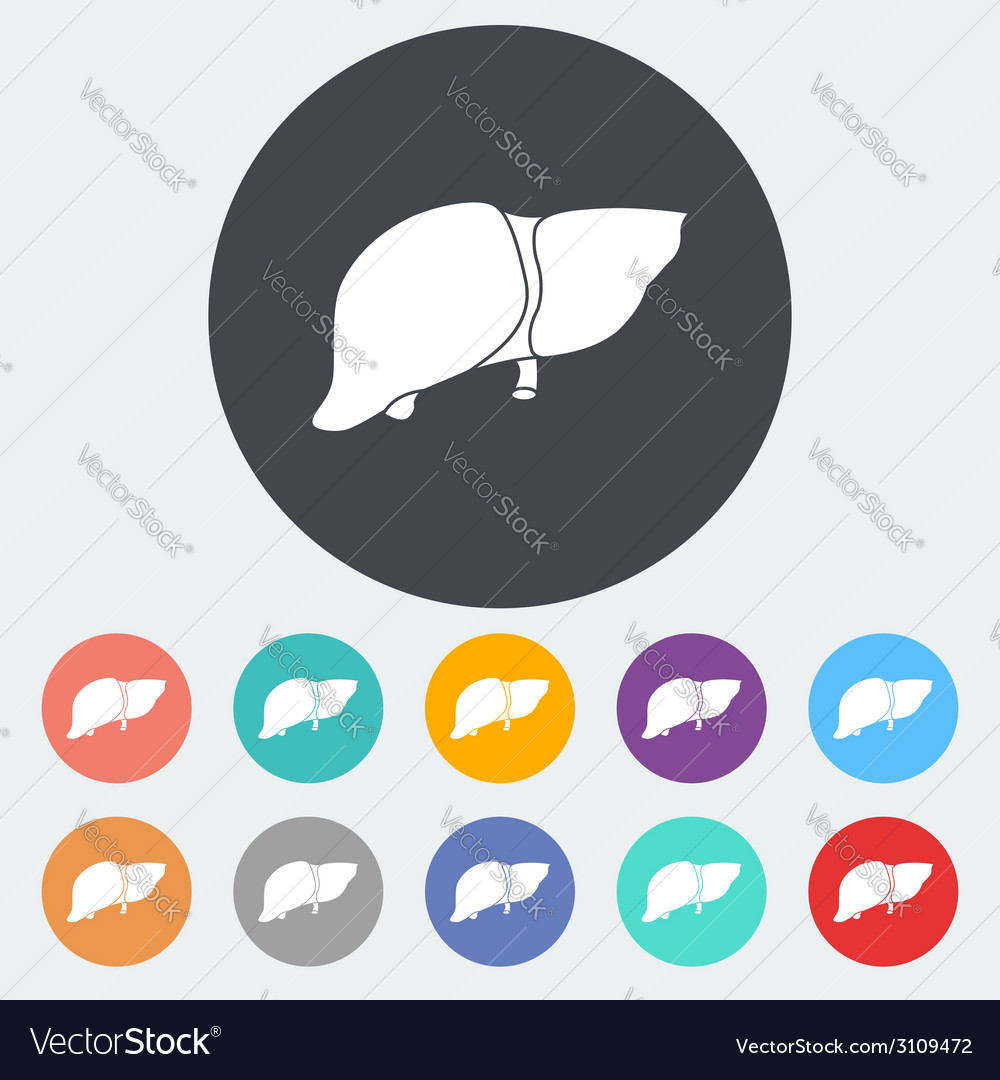 Liver icon vector | Price: 1 Credit (USD $1)