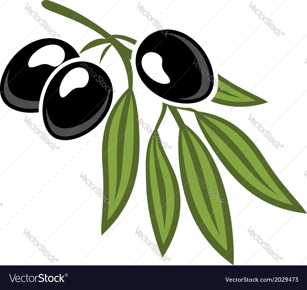 Black olives on a leafy twig vector | Price: 1 Credit (USD $1)