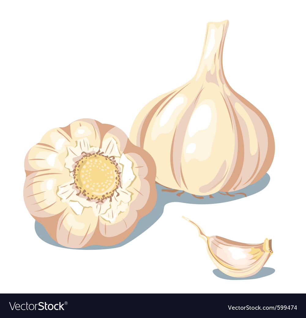 Garlic vector | Price: 3 Credit (USD $3)
