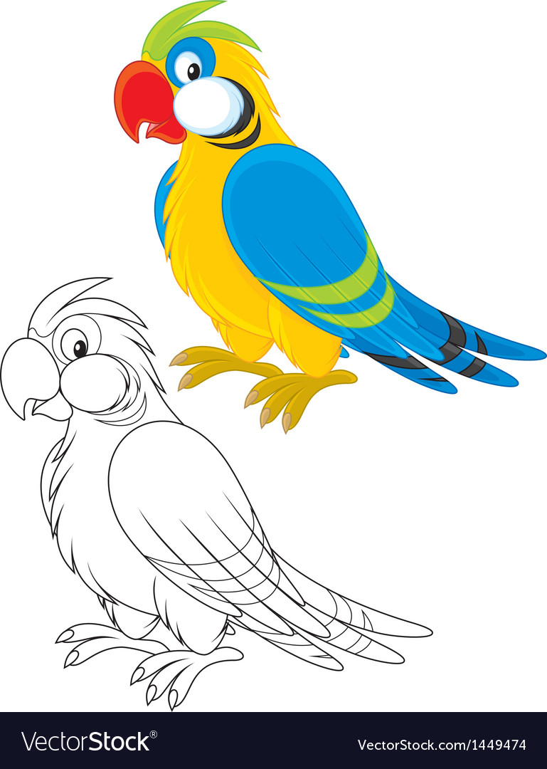 Parrot vector | Price: 1 Credit (USD $1)