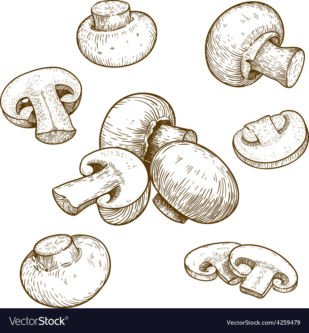 Engraving champignons set vector | Price: 1 Credit (USD $1)
