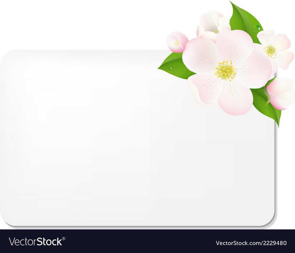 Apple tree flowers with blank gift tags vector | Price: 1 Credit (USD $1)