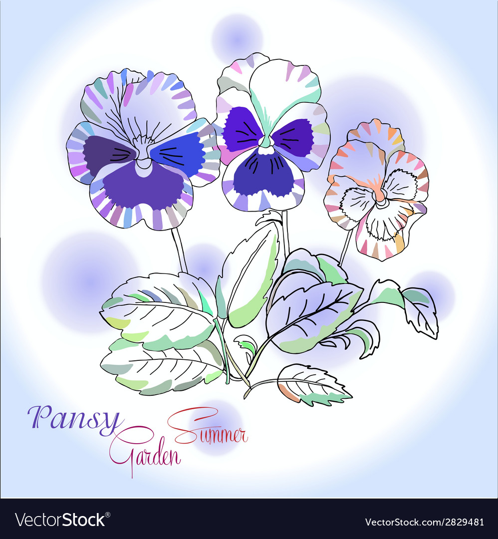 Pansy on blue background vector   Price: 1 Credit (USD $1)