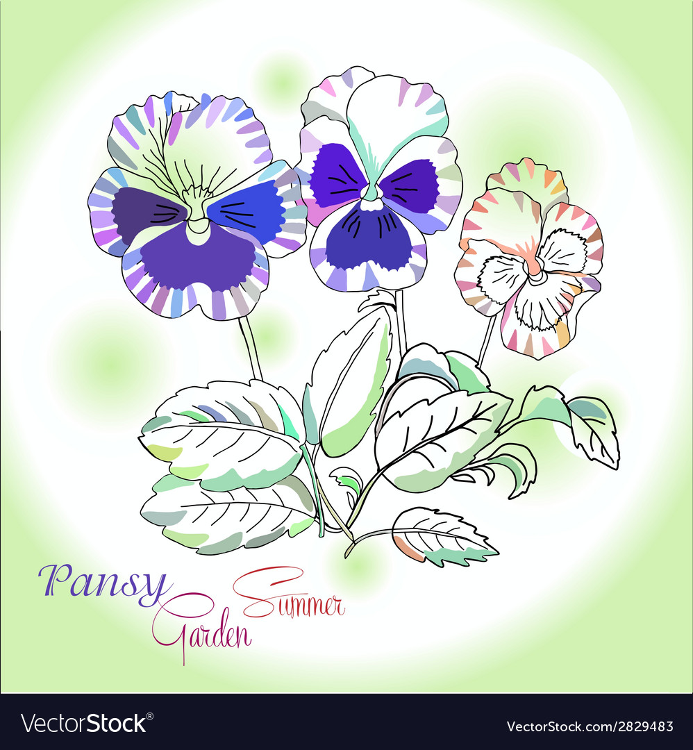 Pansy on green background vector | Price: 1 Credit (USD $1)