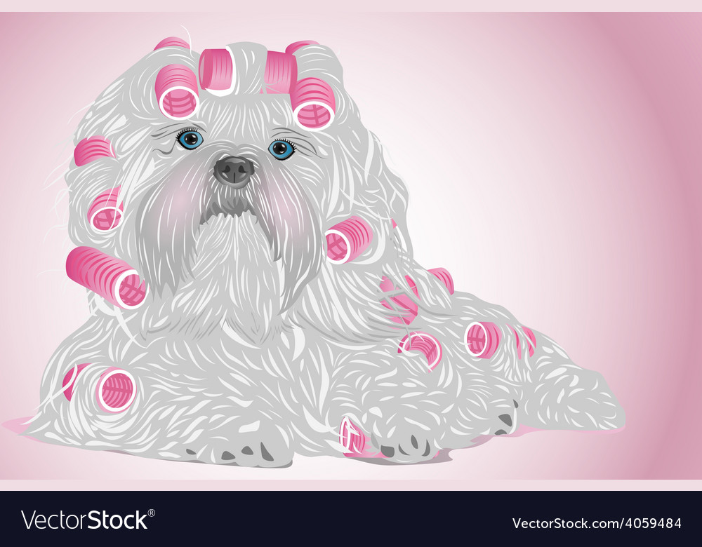 Shih tzu female dog vector | Price: 1 Credit (USD $1)