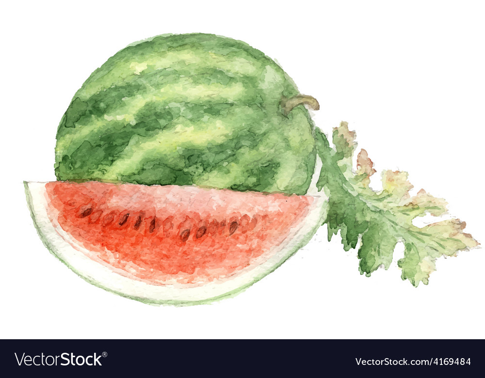 Vegetable vitamin painting watercolor vector | Price: 1 Credit (USD $1)