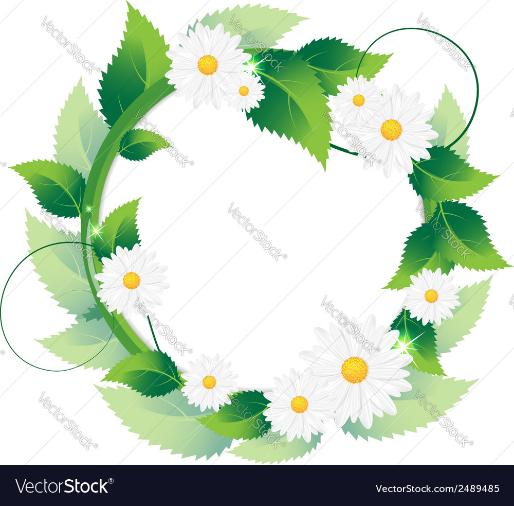 Daisies with green leaves vector | Price: 1 Credit (USD $1)