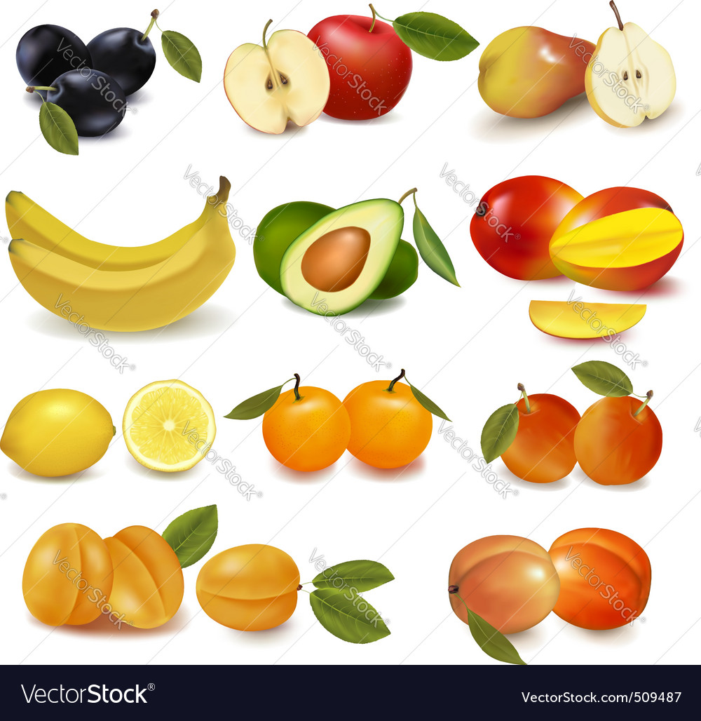 Group with sorts of fruit vector | Price: 3 Credit (USD $3)