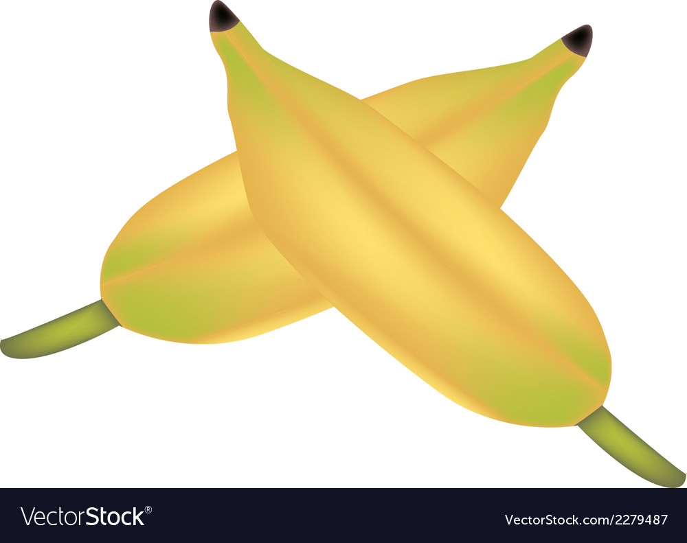 Two ripe asian banana on white background vector | Price: 1 Credit (USD $1)