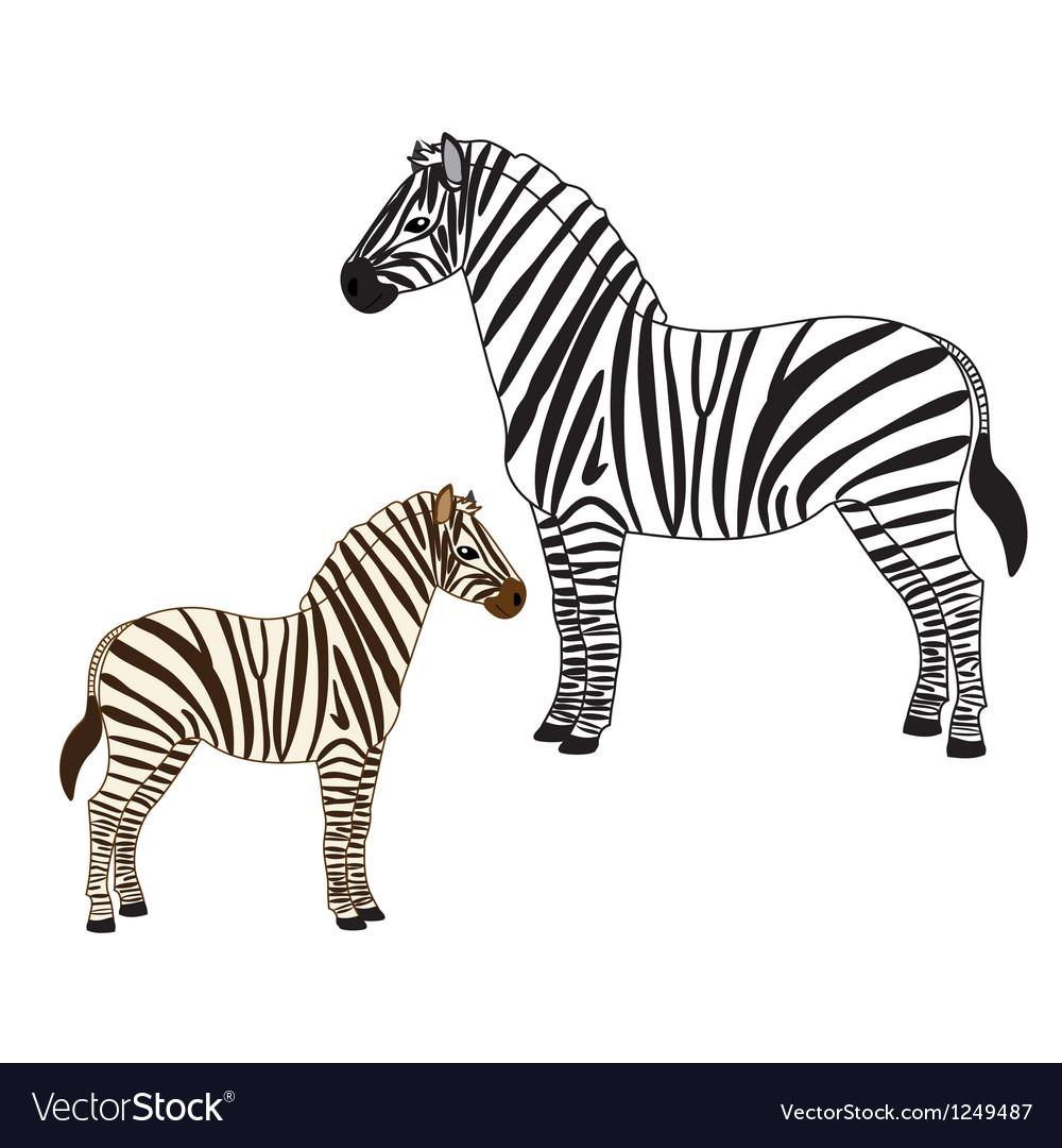 Two zebras vector | Price: 1 Credit (USD $1)
