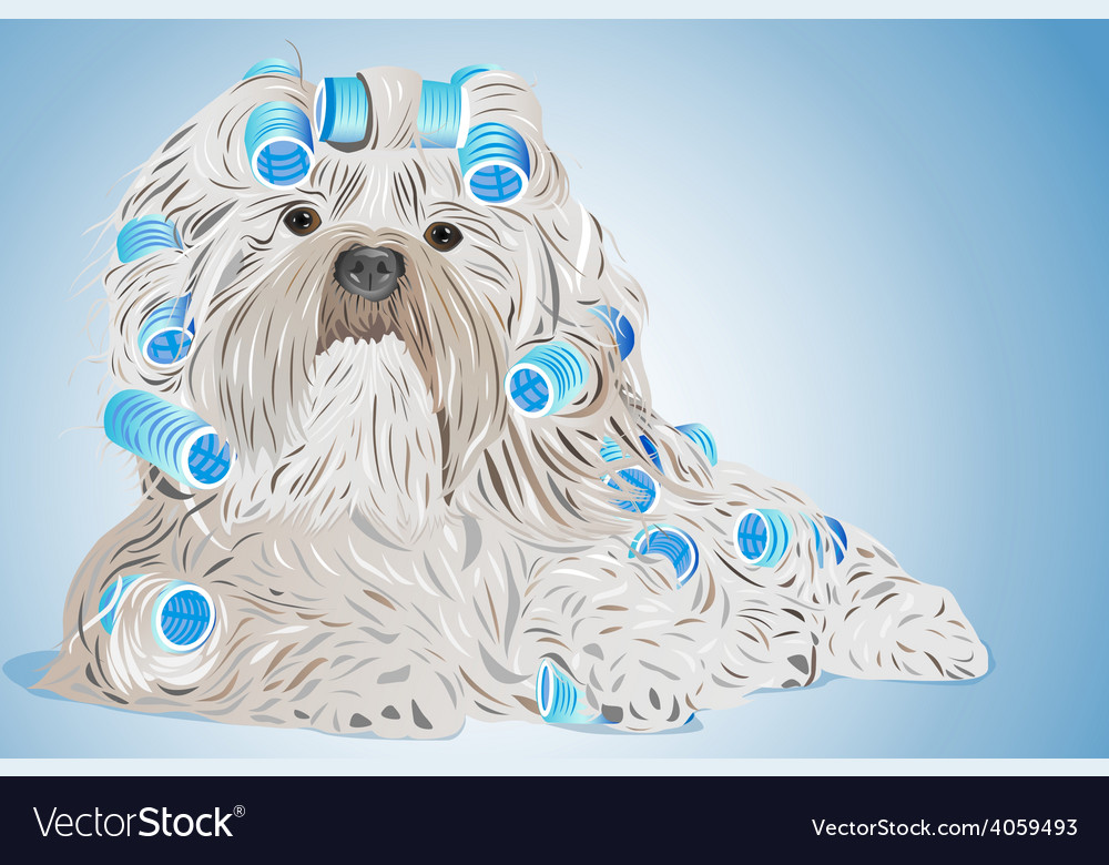 Shih tzu dog vector | Price: 1 Credit (USD $1)