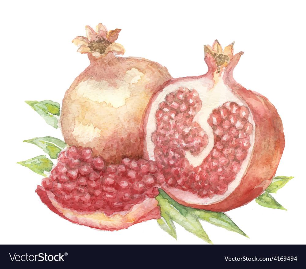 Vegetable vitamin painting watercolor vector | Price: 1 Credit (USD $1)