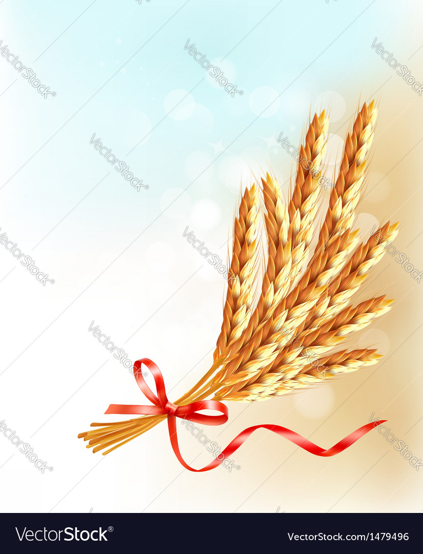 Ears of wheat with red ribbon vector | Price: 1 Credit (USD $1)