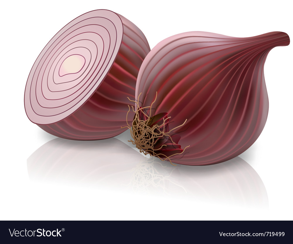 Red onion vector | Price: 3 Credit (USD $3)