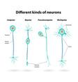 Neurons vector