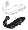 Catfish vector