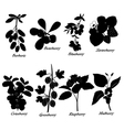 Basic berries collection vector
