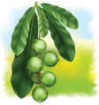Leaves and fruits vector