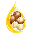 Macadamia oil vector