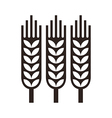 Wheat ear icon vector