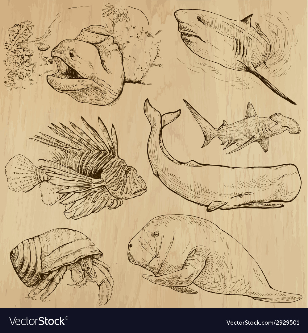 Underwater sea life set no4 - hand drawn vector   Price: 1 Credit (USD $1)
