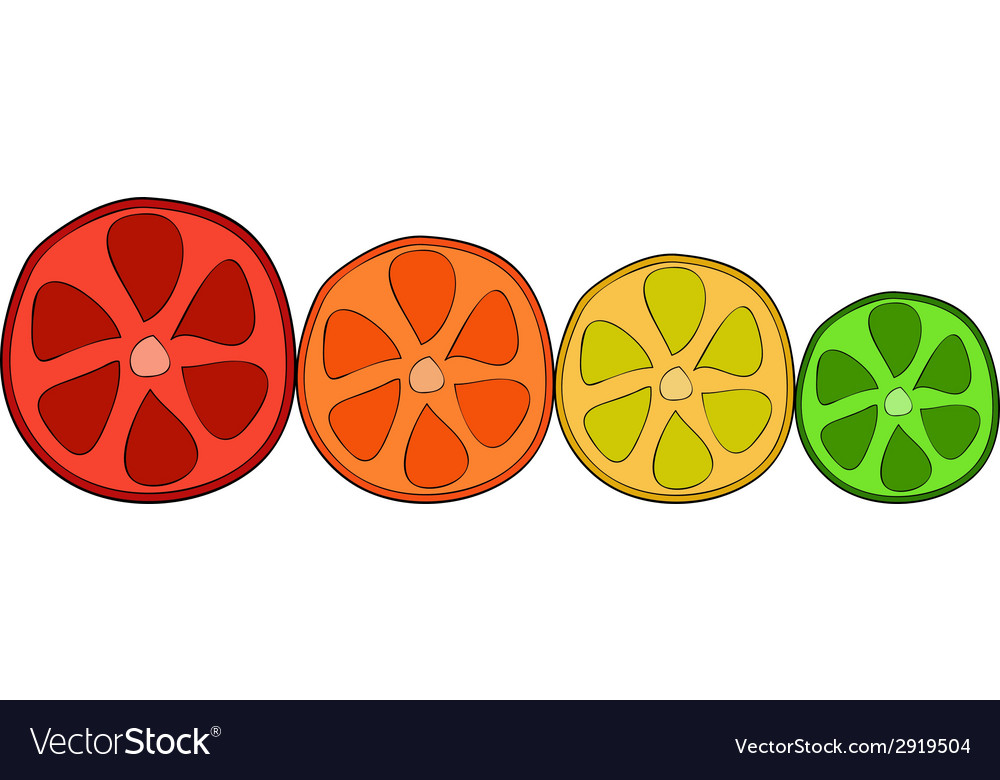 Doodle citrus slices vector | Price: 1 Credit (USD $1)