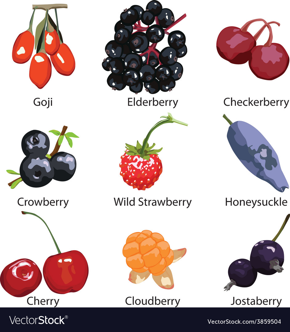 Set of different berries on a white background vector | Price: 1 Credit (USD $1)