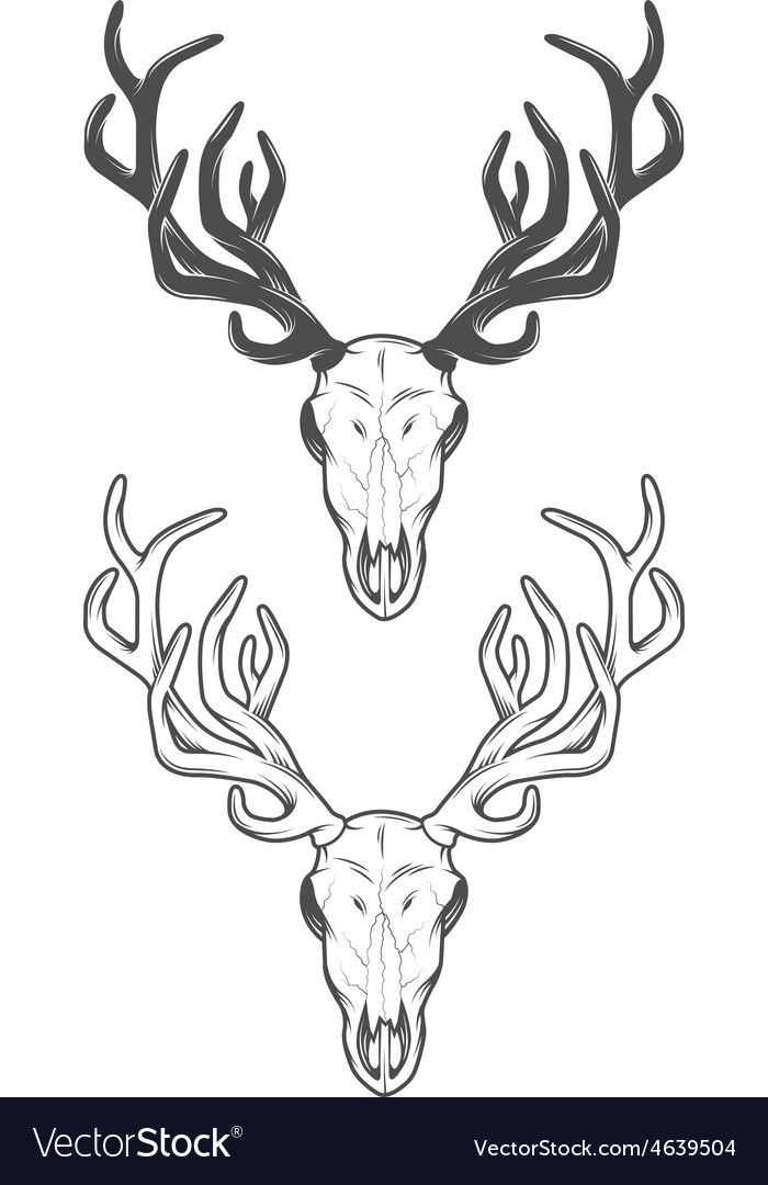 The skull of a deer the two versions vector | Price: 1 Credit (USD $1)