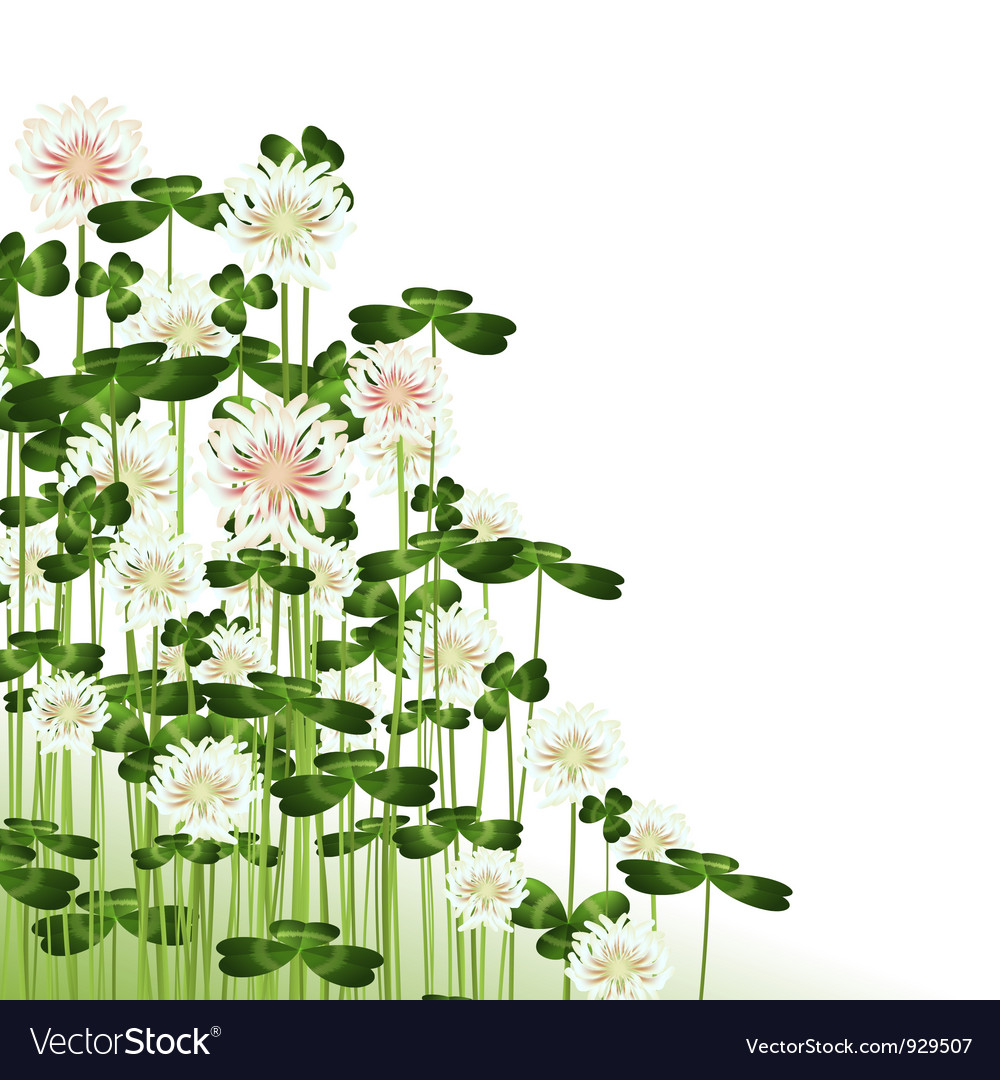 Clover flowers vector | Price: 1 Credit (USD $1)