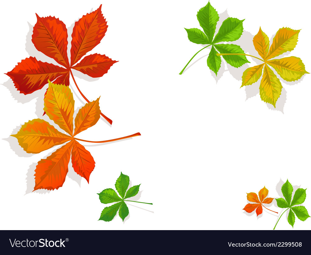 Fall colorful chestnuts leaves vector | Price: 1 Credit (USD $1)