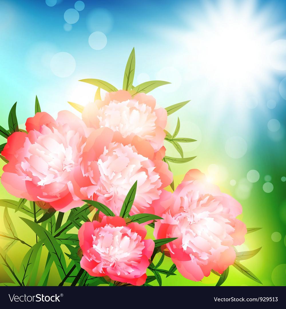 Peony flowers vector | Price: 1 Credit (USD $1)