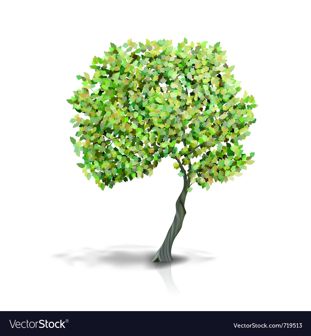 Tree isolated on white vector | Price: 1 Credit (USD $1)
