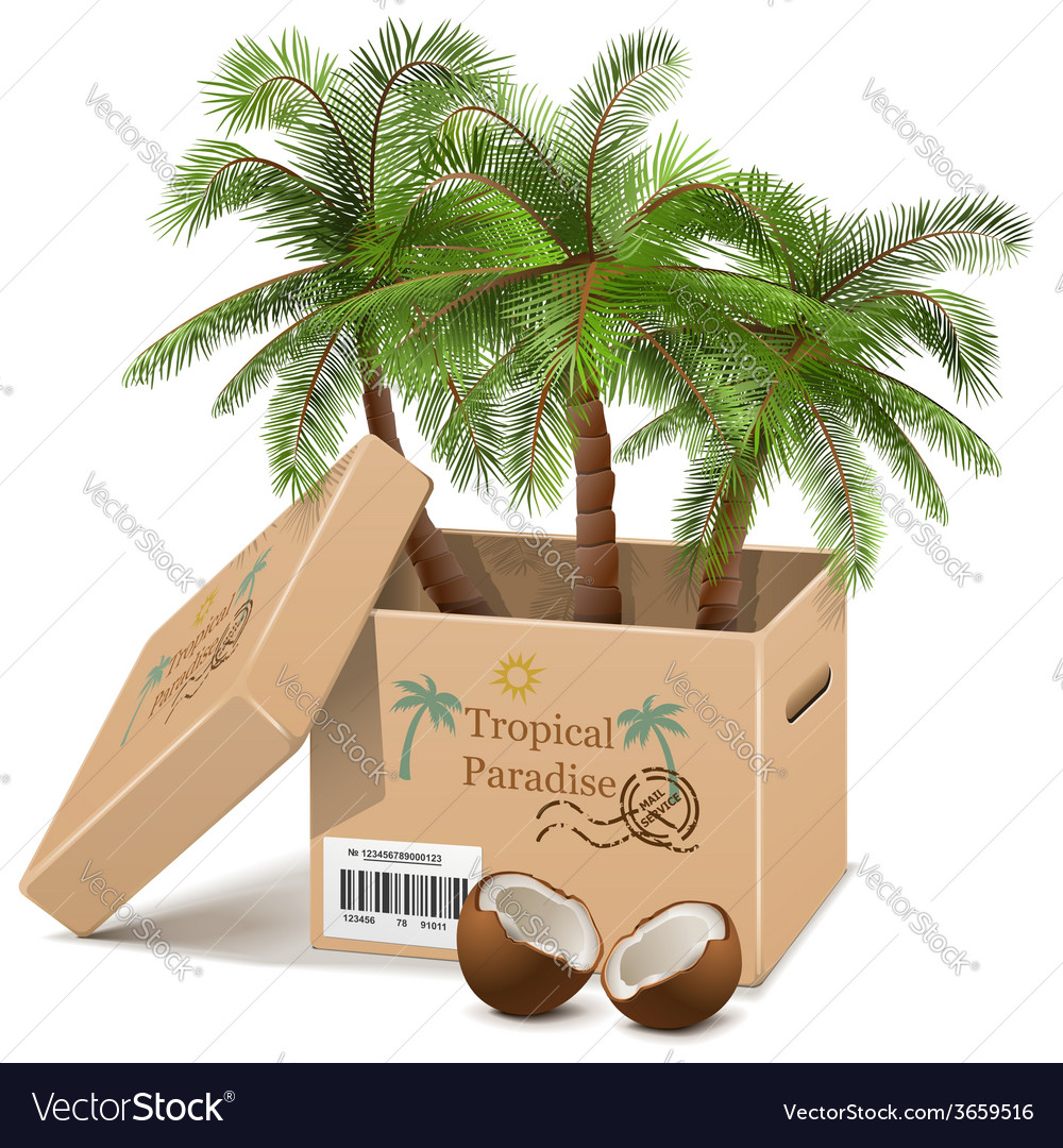 Palm tree in box vector | Price: 3 Credit (USD $3)