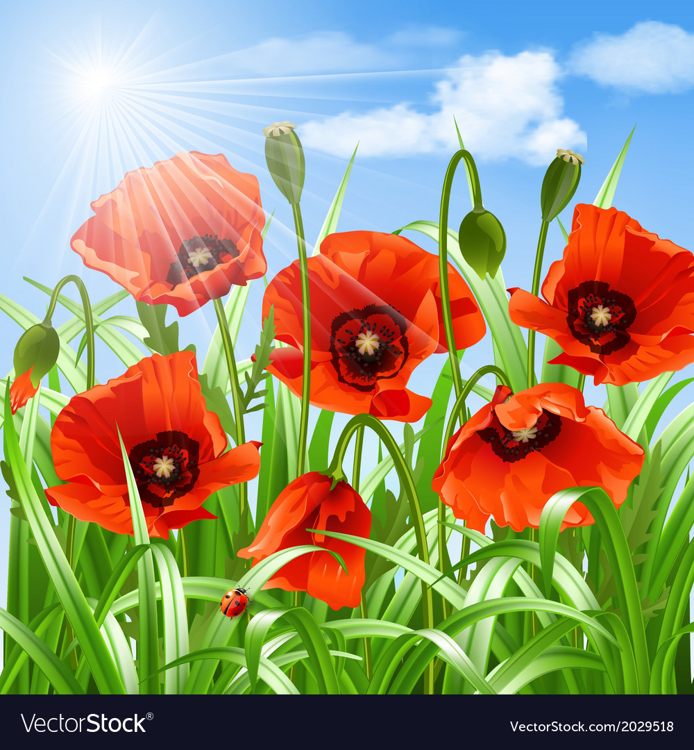 Red poppies in grass vector | Price: 1 Credit (USD $1)