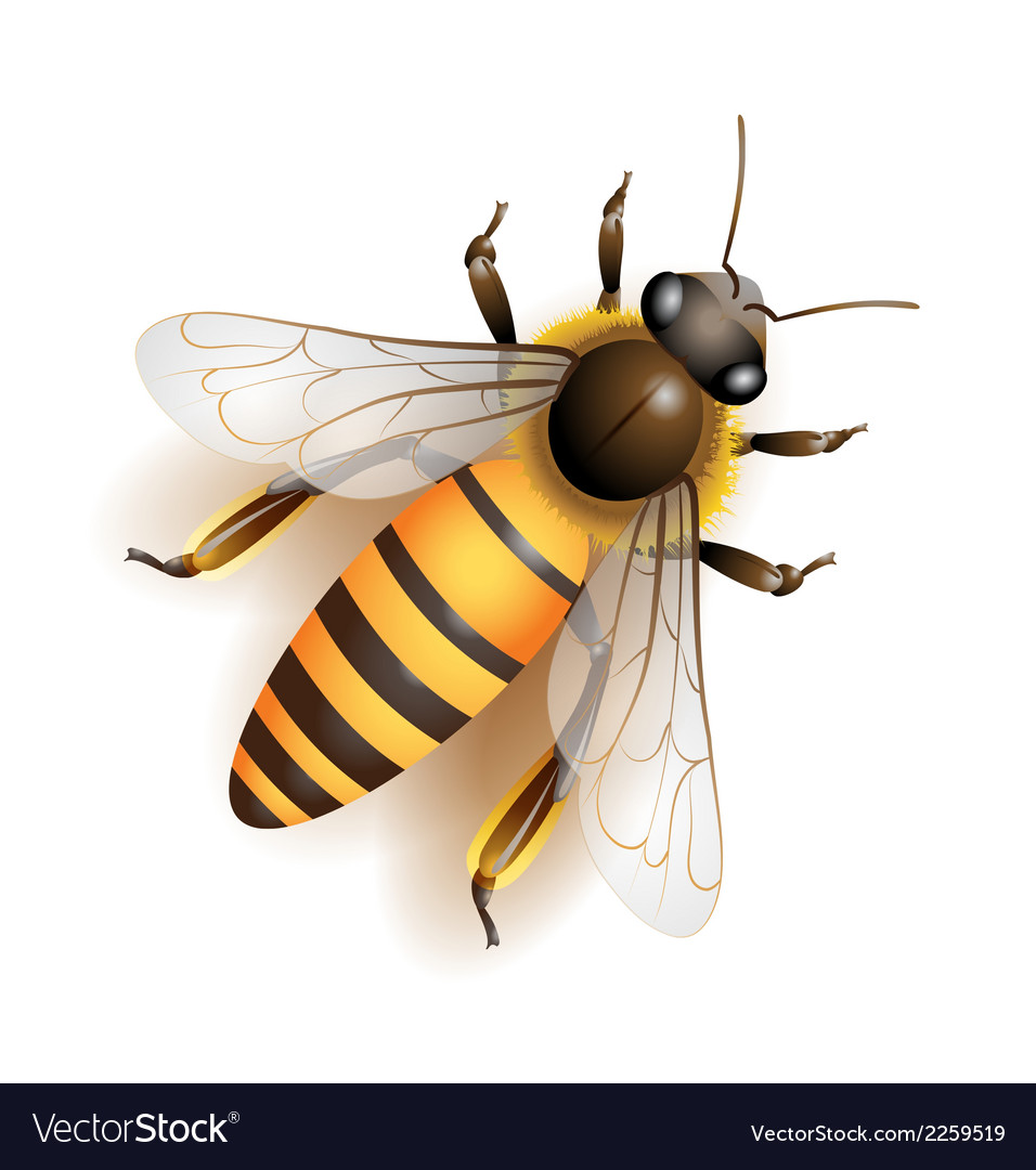 Bee download colorful vector | Price: 1 Credit (USD $1)