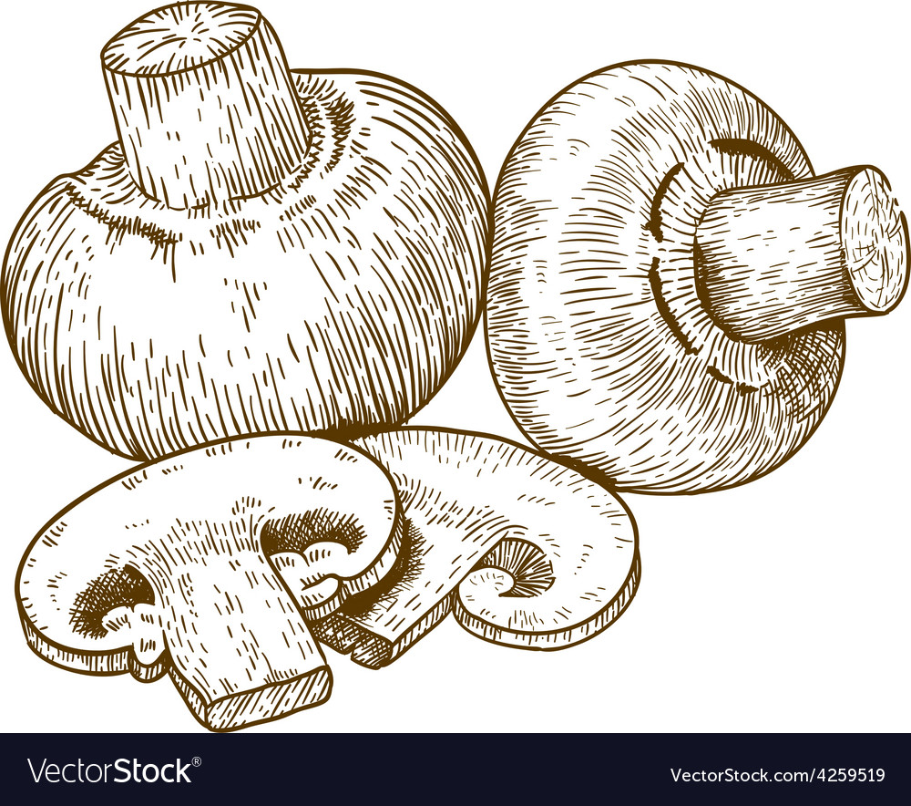 Engraving champignons vector | Price: 1 Credit (USD $1)