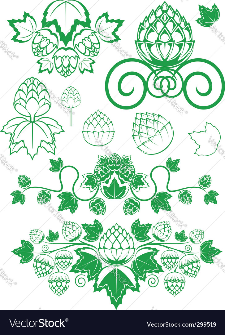 Malt and hop leaves vector | Price: 1 Credit (USD $1)