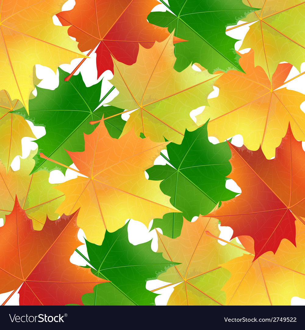 Colorful background with maple leaves vector   Price: 1 Credit (USD $1)