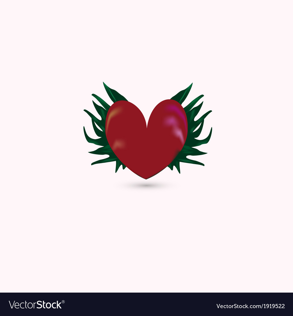 Red heart isolated on white vector | Price: 1 Credit (USD $1)