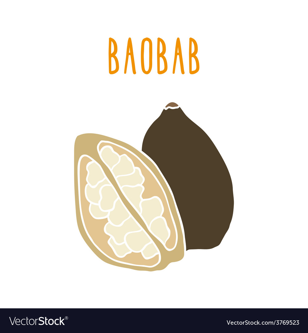 Baobab superfood vector | Price: 1 Credit (USD $1)