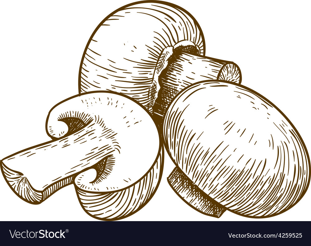 Engraving tree champignons vector | Price: 1 Credit (USD $1)