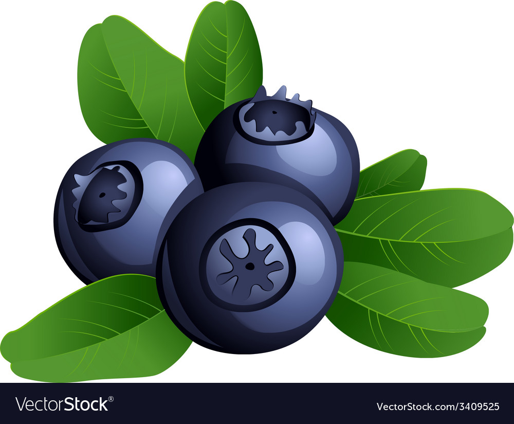 Ripe summer blueberry with leaves vector | Price: 1 Credit (USD $1)