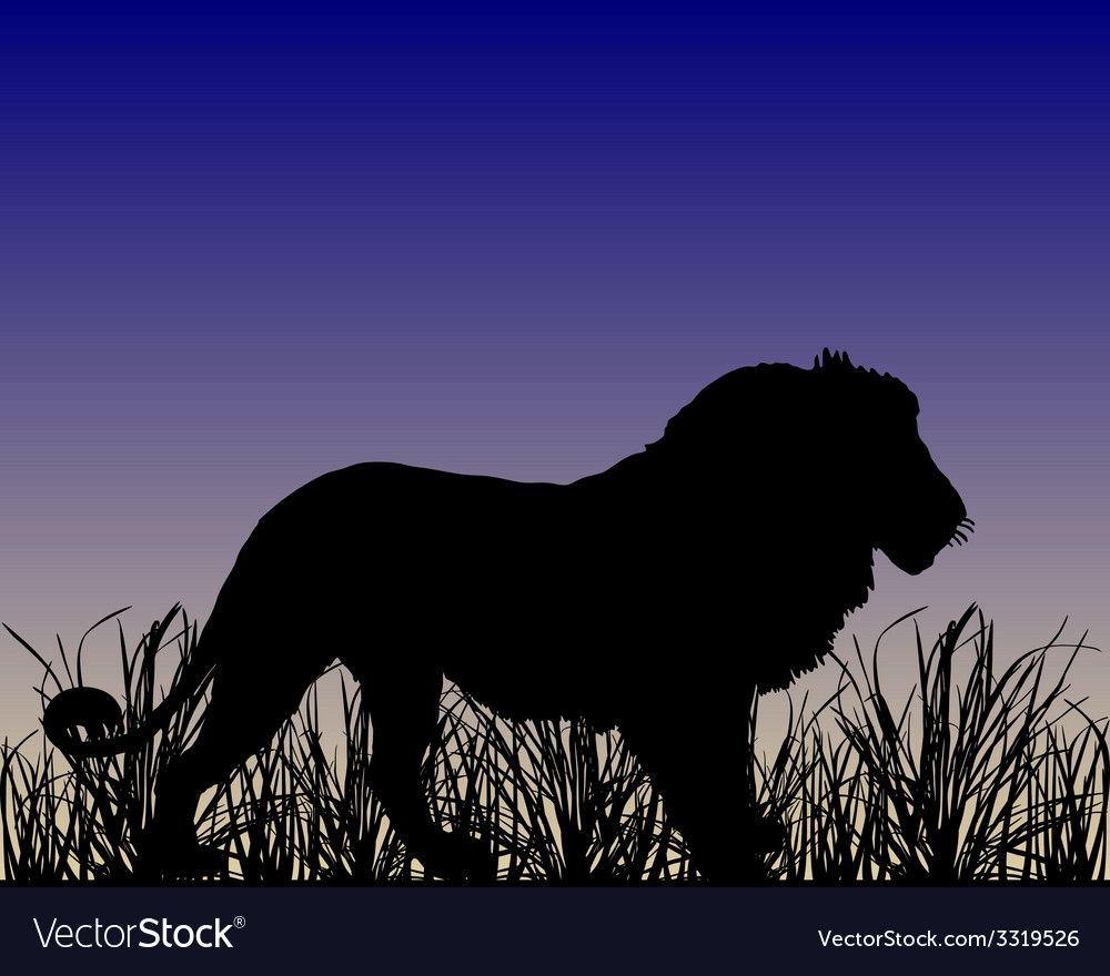 Dawn in savanna with lion vector | Price: 1 Credit (USD $1)