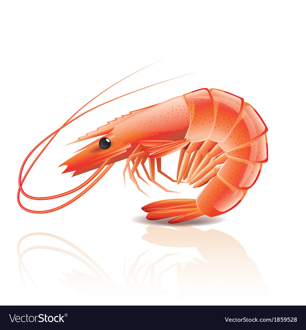 Object shrimp vector | Price: 1 Credit (USD $1)