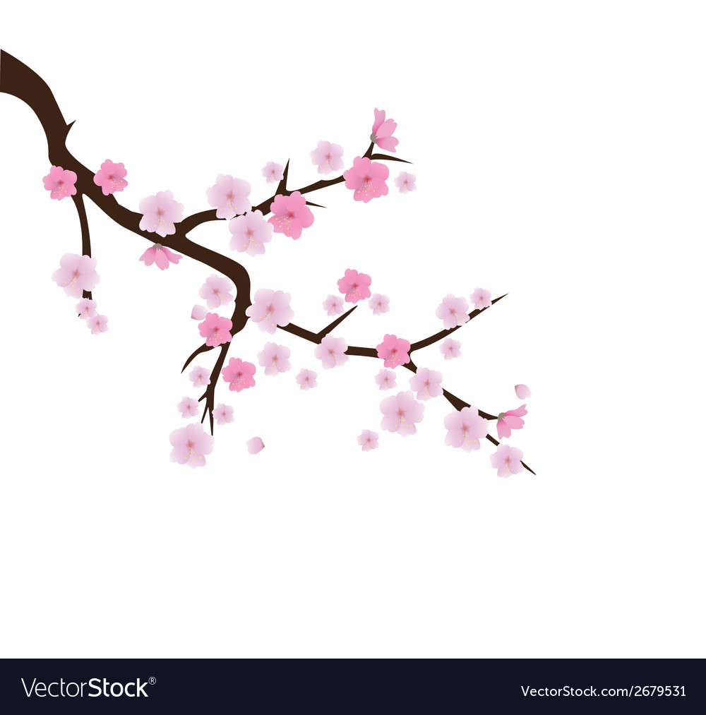 Blooming cherry 2 vector | Price: 1 Credit (USD $1)